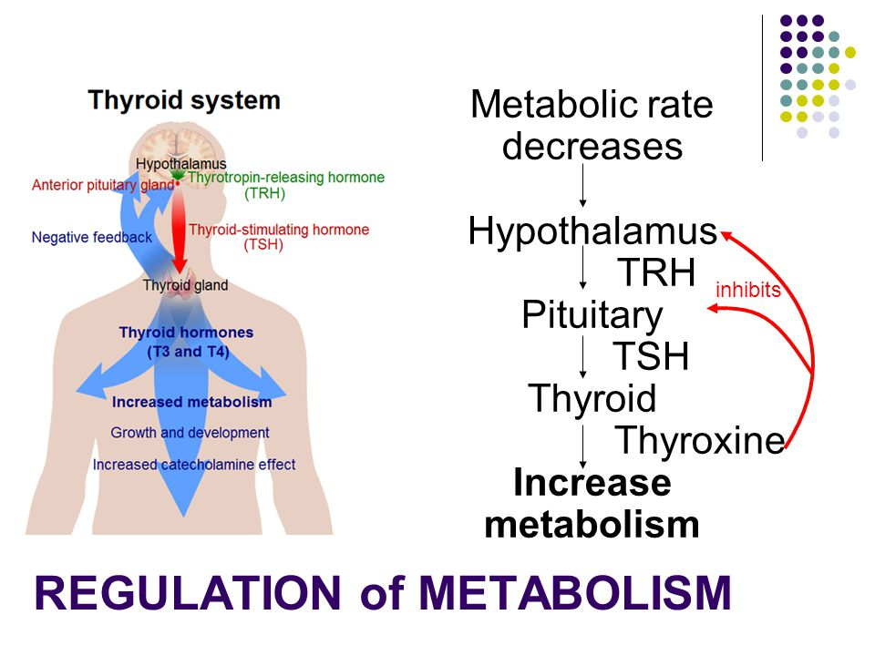 Metabolic rate decreases hypothalamus sends thyroid releasing hormone (TRH) to the anterior pituitary Anterior pituitary releases thyroid stimulating hormone (TSH) TSH acts on thyroid to stimulate release of thyroxine.