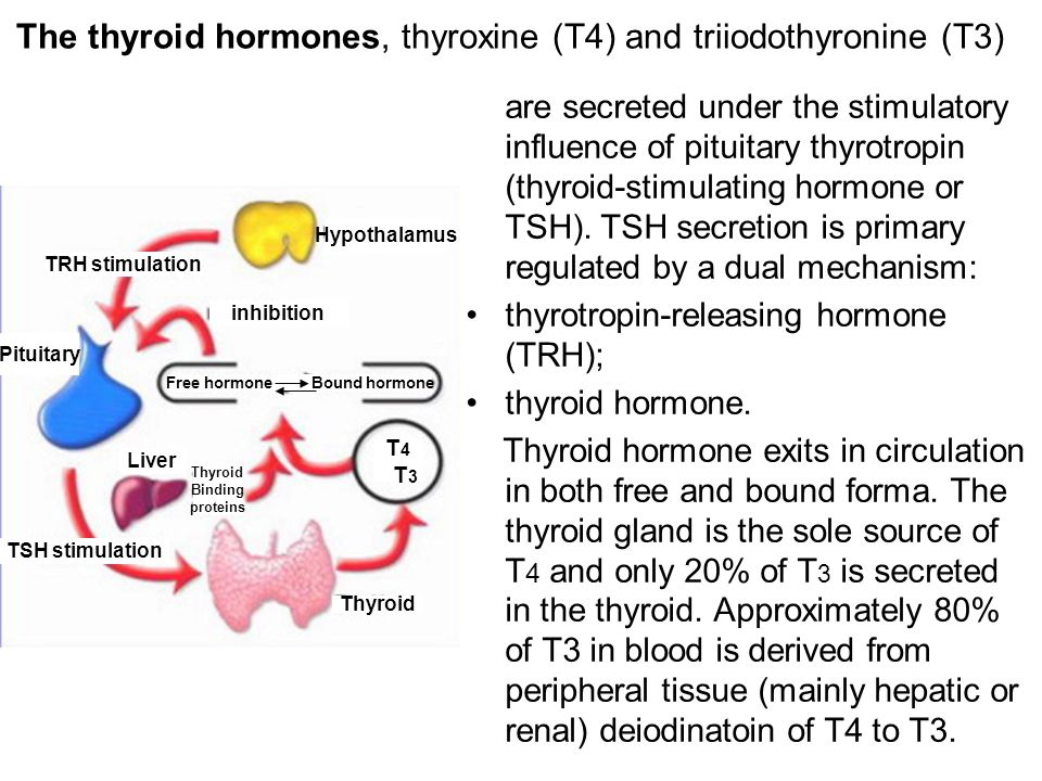 The thyroid hormones, thyroxine (T4) and triiodothyronine (T3) are secreted under the stimulatory influence of pituitary thyrotropin (thyroid-stimulating hormone or TSH).
