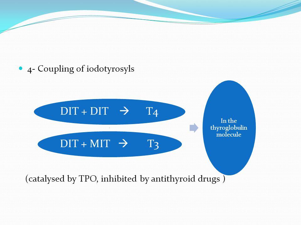 4- Coupling of iodotyrosyls (catalysed by TPO, inhibited by antithyroid drugs ) DIT + DIT  T4DIT + MIT  T3 In the thyroglobuli n molecule