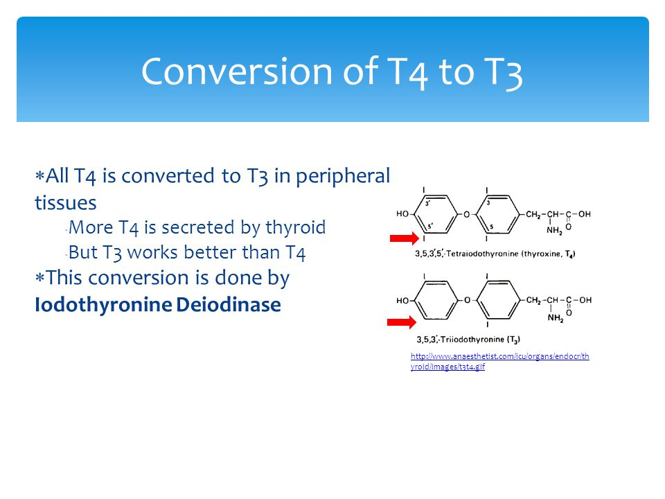  All T4 is converted to T3 in peripheral tissues  More T4 is secreted by thyroid  But T3 works better than T4  This conversion is done by Iodothyr