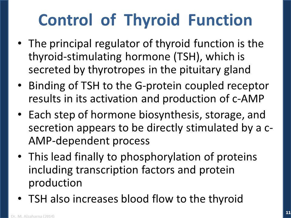 Dr. M. Alzaharna (2014) Control of Thyroid Function The principal regulator of thyroid function is the thyroid-stimulating hormone (TSH), which is sec
