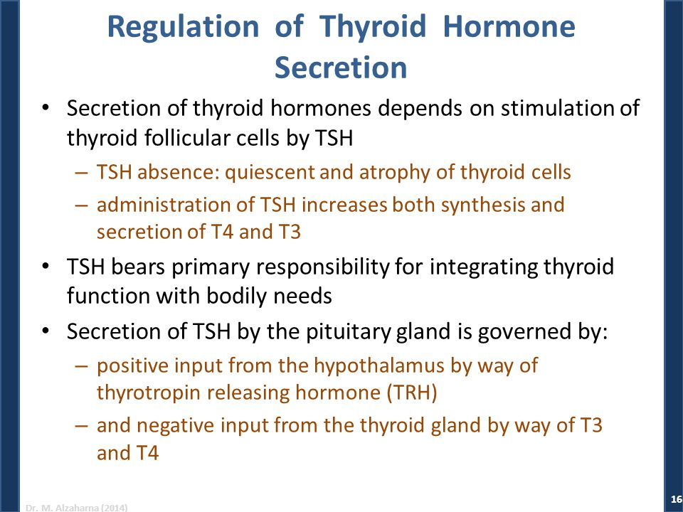 Dr. M. Alzaharna (2014) Regulation of Thyroid Hormone Secretion Secretion of thyroid hormones depends on stimulation of thyroid follicular cells by TS