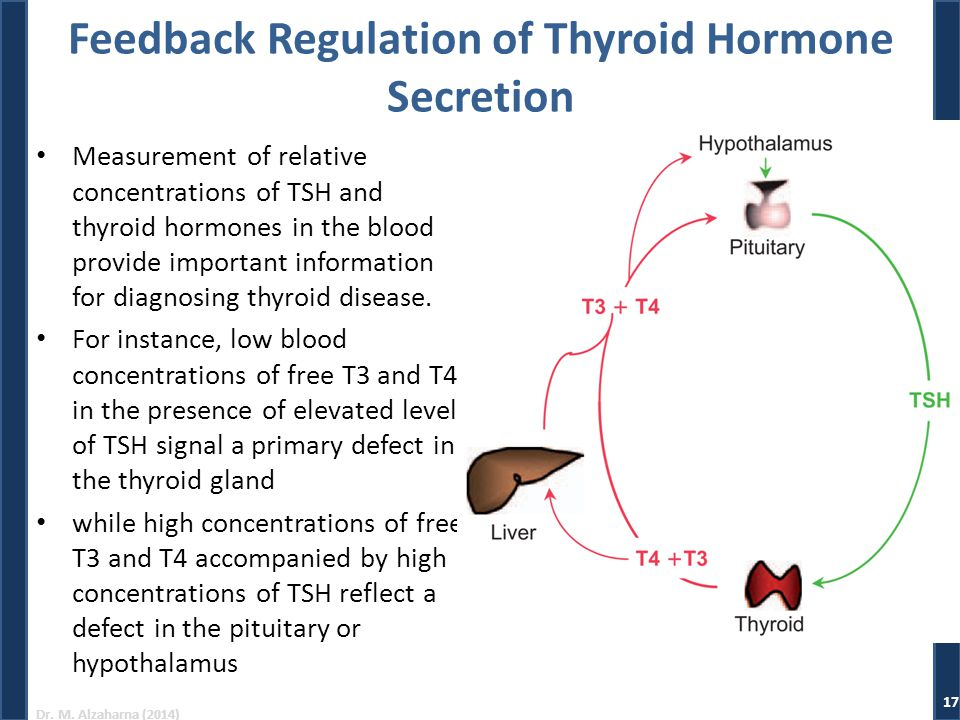 Dr. M. Alzaharna (2014) Feedback Regulation of Thyroid Hormone Secretion Measurement of relative concentrations of TSH and thyroid hormones in the blo
