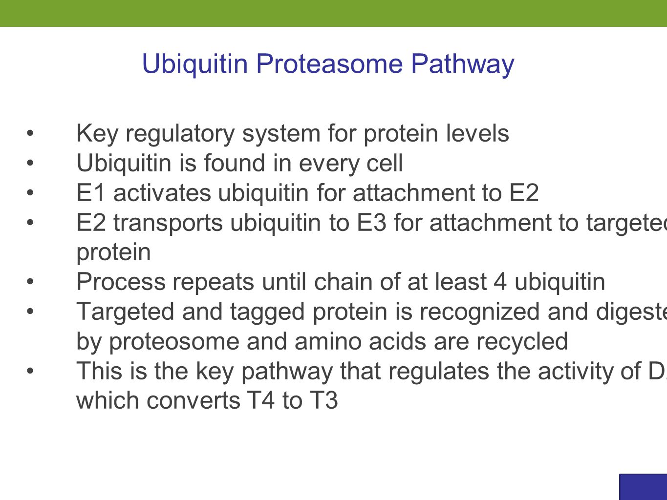 Ubiquitin Proteasome Pathway Key regulatory system for protein levels Ubiquitin is found in every cell E1 activates ubiquitin for attachment to E2 E2 transports ubiquitin to E3 for attachment to targeted protein Process repeats until chain of at least 4 ubiquitin Targeted and tagged protein is recognized and digested by proteosome and amino acids are recycled This is the key pathway that regulates the activity of D2 which converts T4 to T3