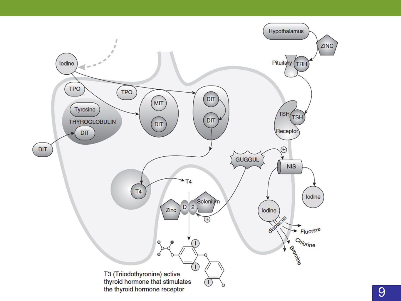 10 RXR = retinoid X receptor; THR = thyroid hormone receptor Gereben B, Zavacki A, Ribich S.