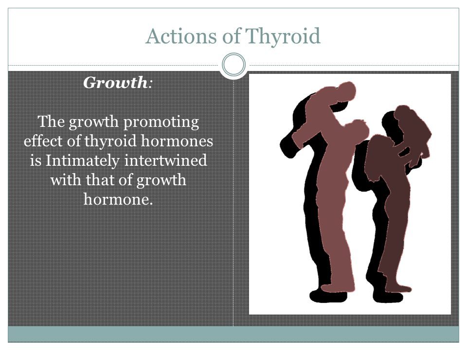 Hormones of the Thyroid Gland The thyroid gland produces the hormone called Thyroxine (T4) – this contains 4 molecules of iodine T4 is converted into the much more active form of thyroid hormone called Triiodothyronine (T3) – this contains 3 molecules of iodine T4 is converted into T3 in the liver, muscle, kidney and to a lesser degree in all other body tissues