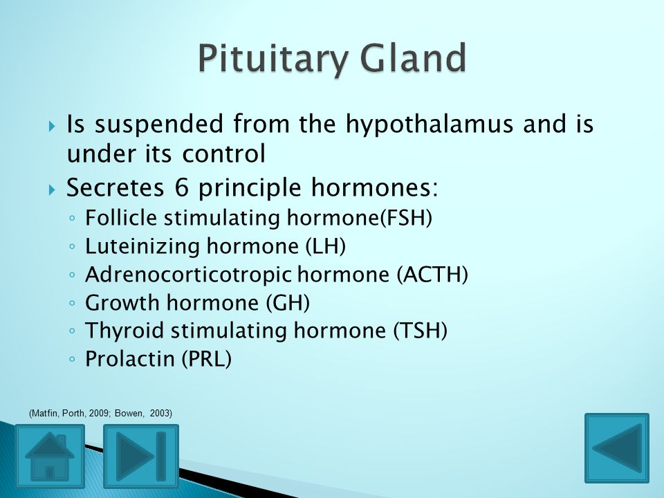  Is suspended from the hypothalamus and is under its control  Secretes 6 principle hormones: ◦ Follicle stimulating hormone(FSH) ◦ Luteinizing hormone (LH) ◦ Adrenocorticotropic hormone (ACTH) ◦ Growth hormone (GH) ◦ Thyroid stimulating hormone (TSH) ◦ Prolactin (PRL) (Matfin, Porth, 2009; Bowen, 2003)