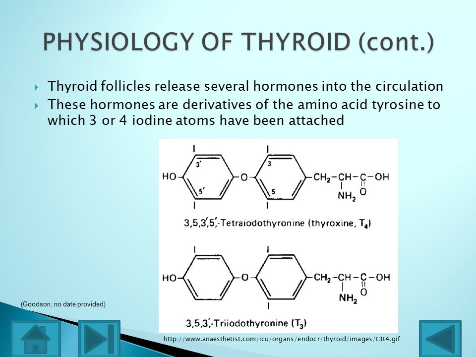  Thyroid follicles release several hormones into the circulation  These hormones are derivatives of the amino acid tyrosine to which 3 or 4 iodine atoms have been attached http://www.anaesthetist.com/icu/organs/endocr/thyroid/images/t3t4.gif (Goodson, no date provided)