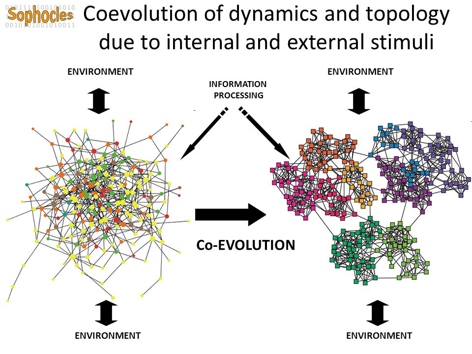 Coevolution of dynamics and topology due to internal and external stimuli ENVIRONMENT Co-EVOLUTION ENVIRONMENT INFORMATION PROCESSING