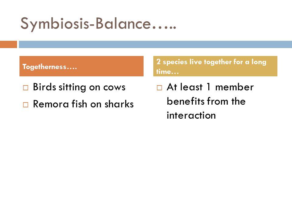 Symbiosis-Balance…..