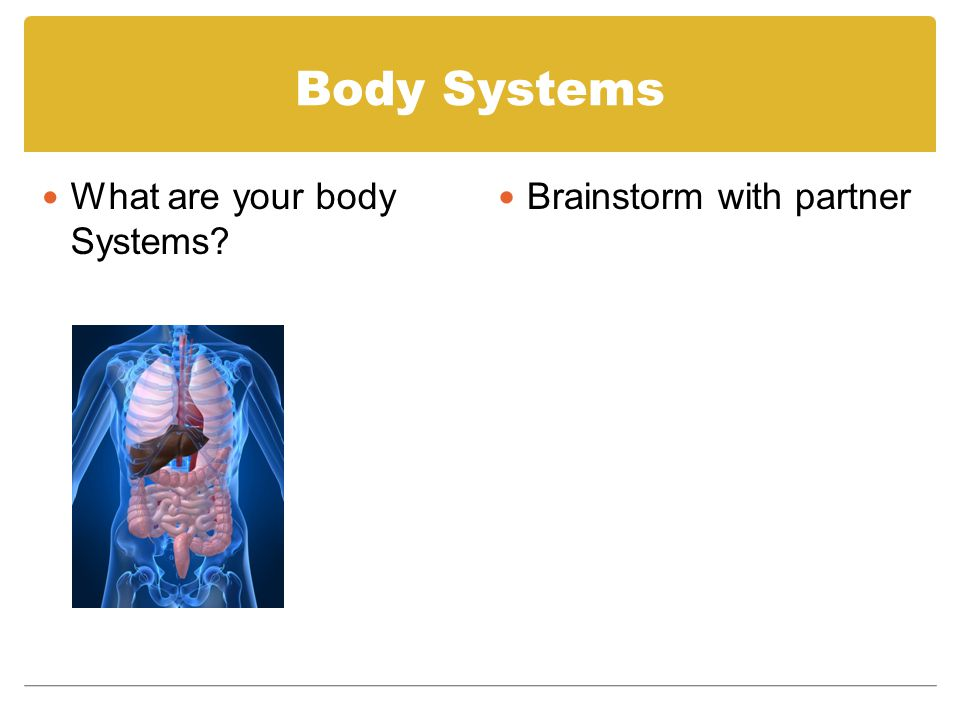 Body Systems What are your body Systems? Brainstorm with partner