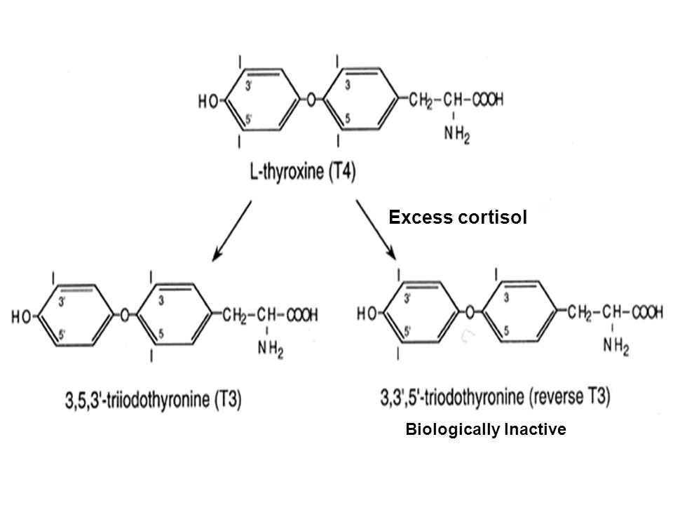 Excess cortisol Biologically Inactive