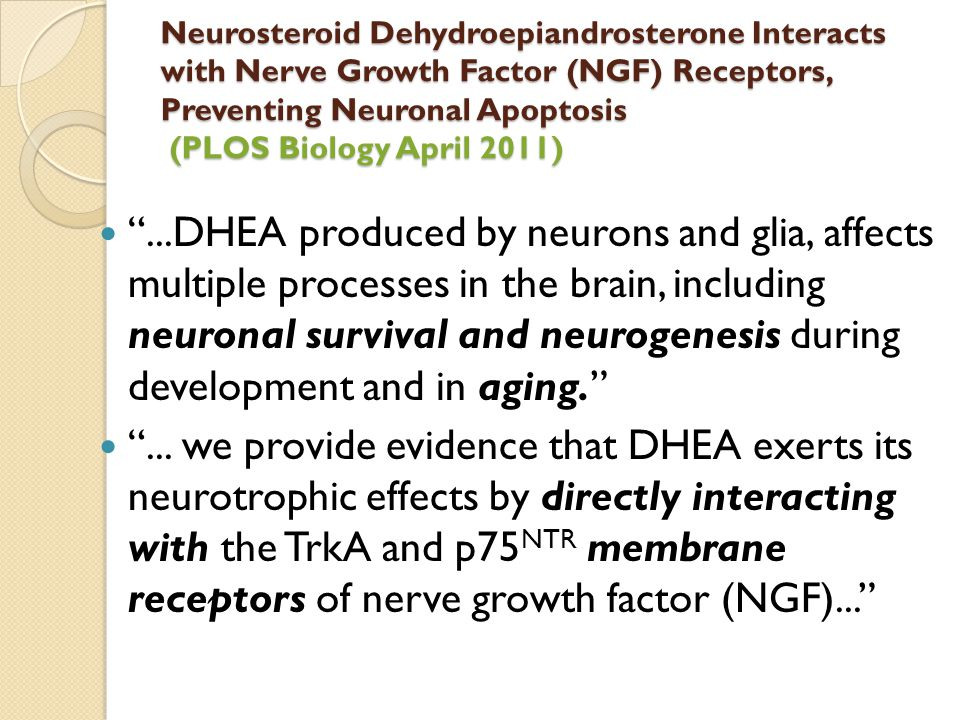 """Neurosteroid Dehydroepiandrosterone Interacts with Nerve Growth Factor (NGF) Receptors, Preventing Neuronal Apoptosis (PLOS Biology April 2011) """"...DH"""