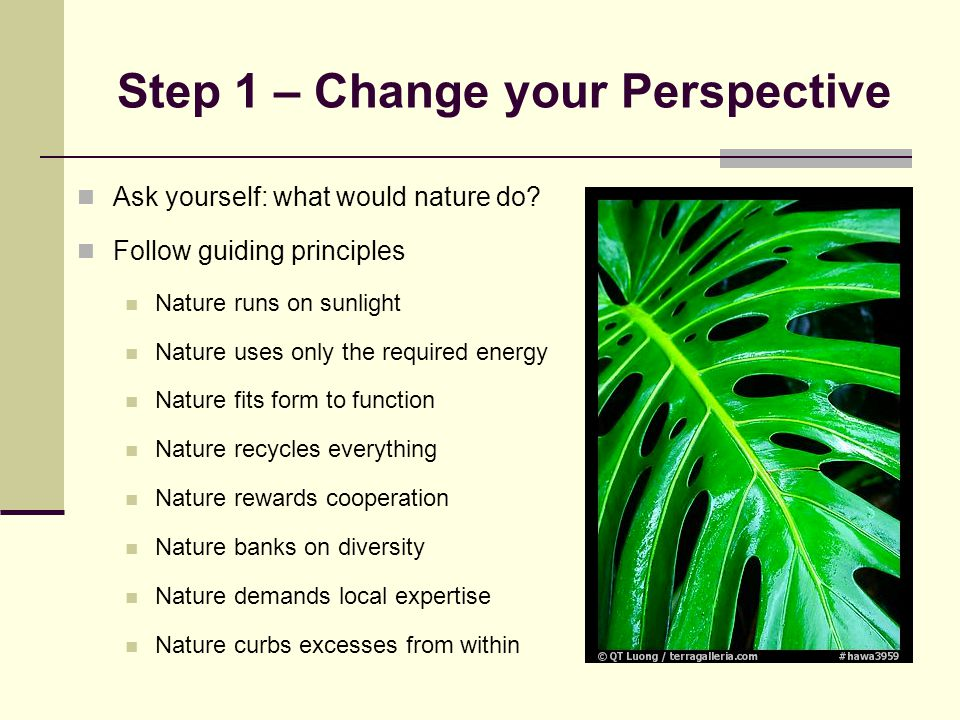 Step 1 – Change your Perspective Ask yourself: what would nature do.