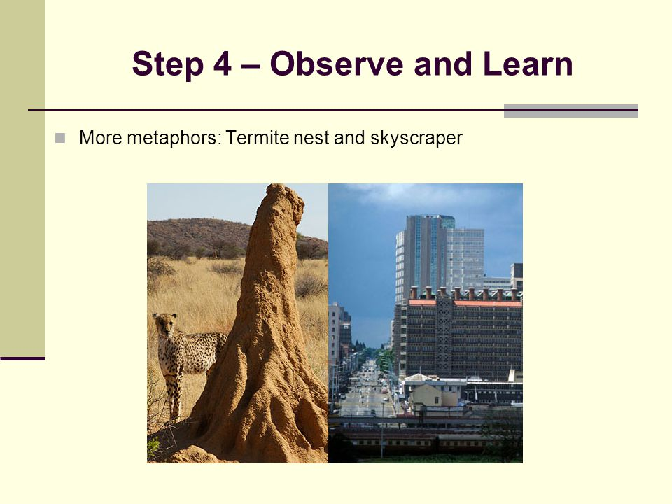 Step 4 – Observe and Learn More metaphors: Termite nest and skyscraper
