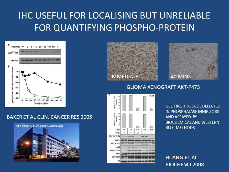 IHC USEFUL FOR LOCALISING BUT UNRELIABLE FOR QUANTIFYING PHOSPHO-PROTEIN BAKER ET AL CLIN.