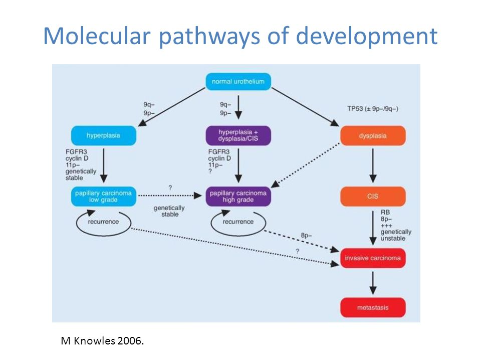 Molecular pathways of development M Knowles 2006.