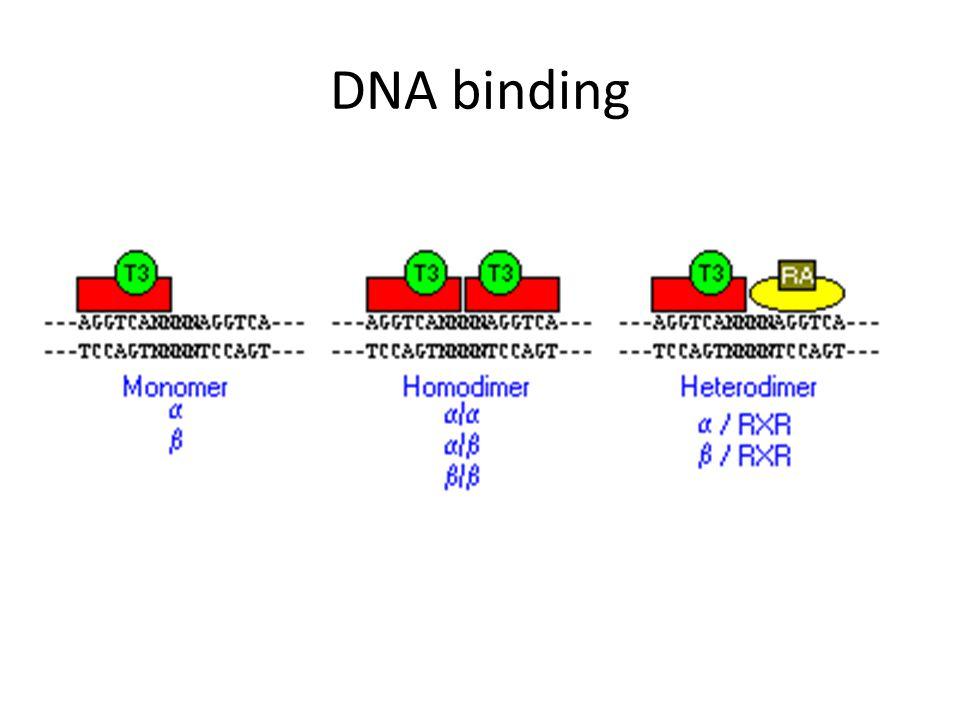 DNA binding