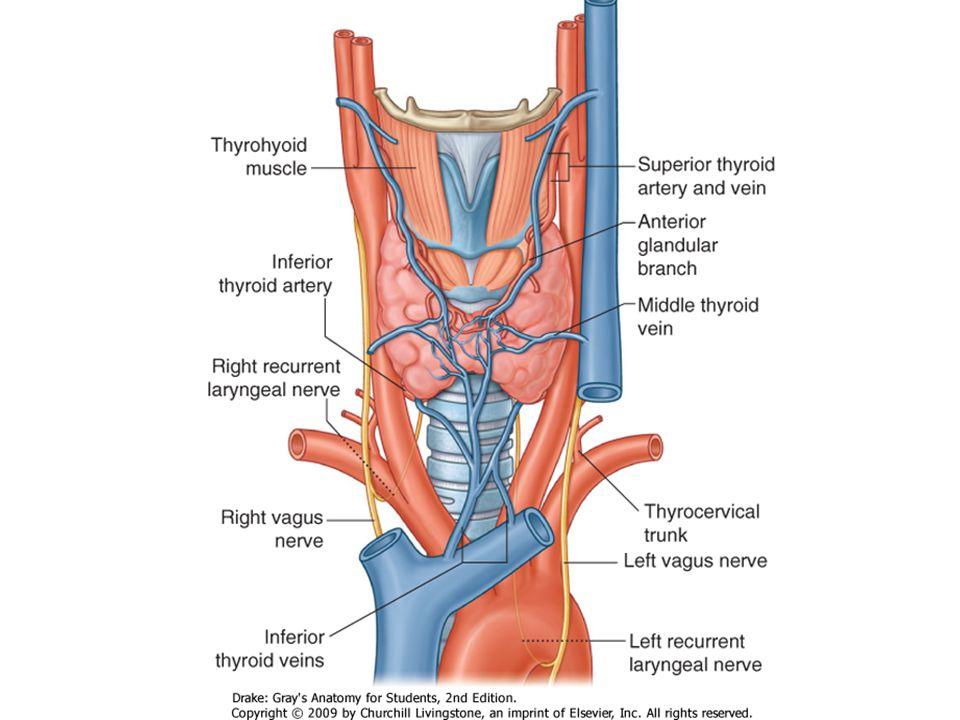 Hypothyroid Autoimmune – Hashimoto thyroiditis Congenital – Inborn errors (often with thyroid peroxidase) Iodine deficiency Iatrogenic – Surgery – Drugs – Radioablation