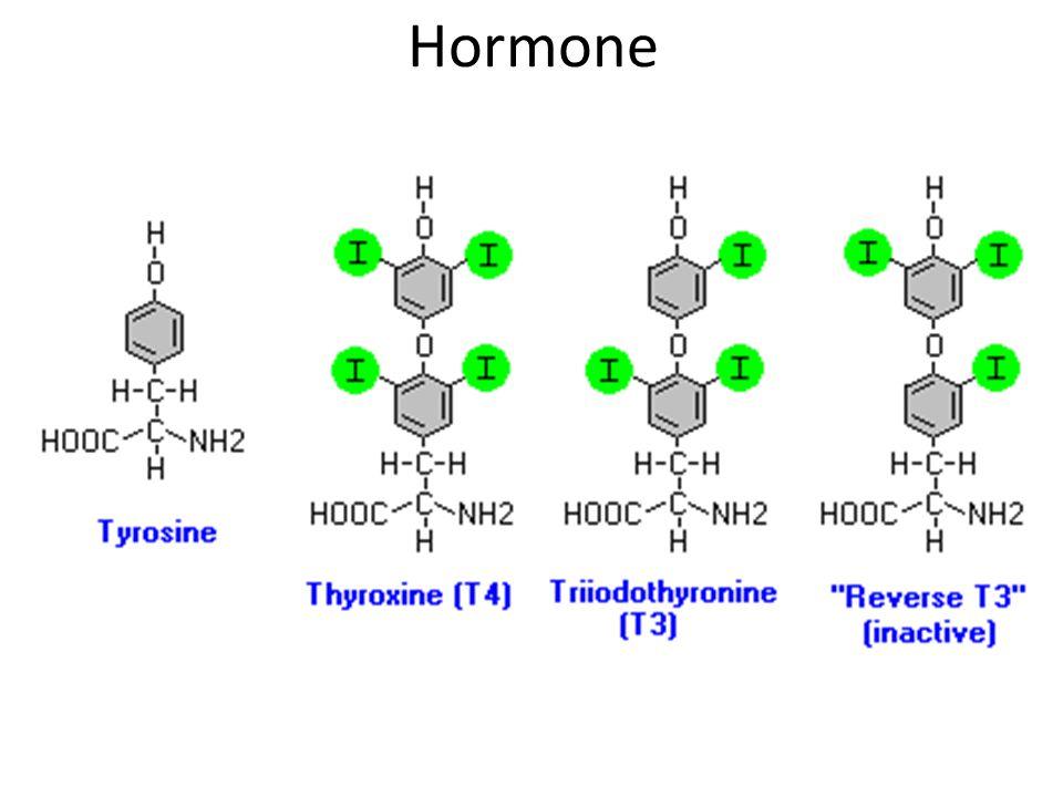 Investigations T3, T4 levels TSH levels Thyroid antibodies (Hashimoto's) TSH receptor antibodies (Grave's) Iodine kinetics Scintillation imaging (hot vs cold nodules)