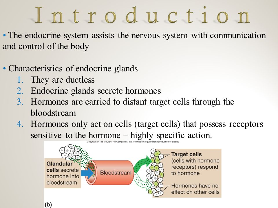Control of Hormonal Secretions Hormone secretion is generally controlled in three ways: 1.Negative Feedback 2.Hormone Deactivation 3.Up/Down Regulation