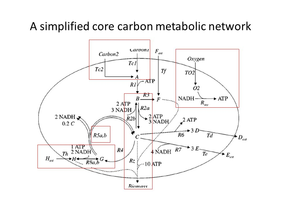 A simplified core carbon metabolic network