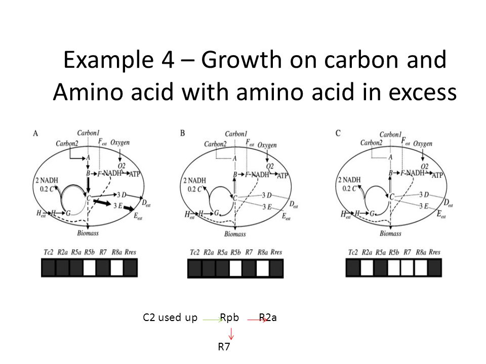 Example 4 – Growth on carbon and Amino acid with amino acid in excess C2 used up Rpb R2a R7