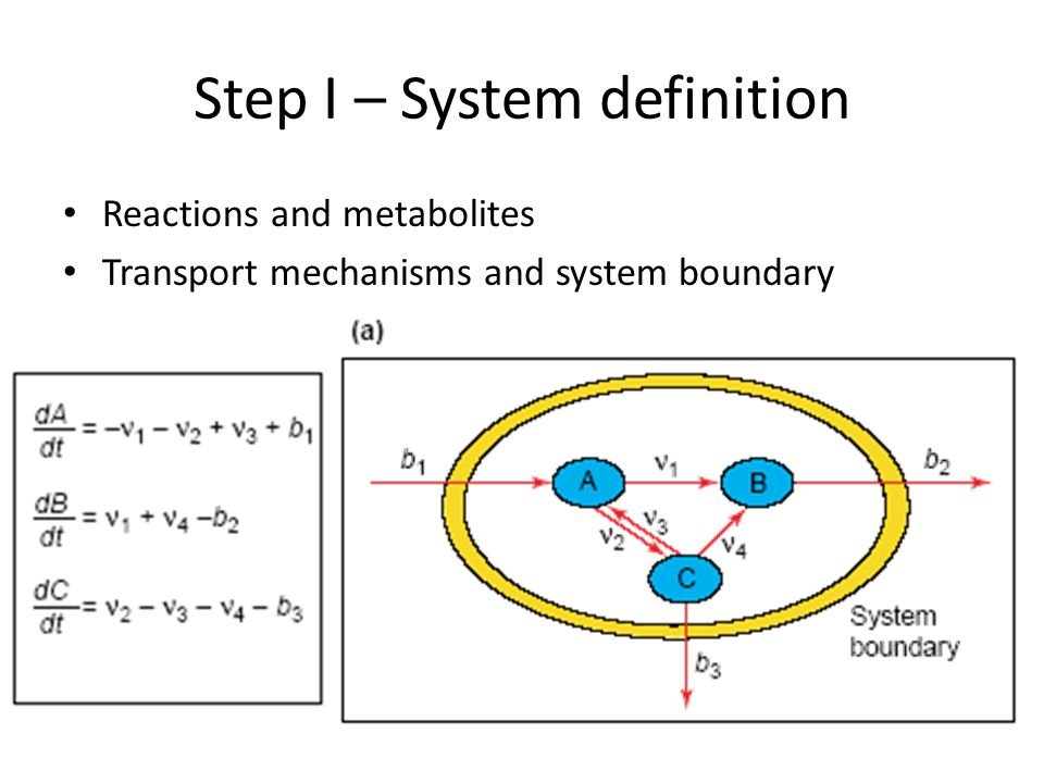 Step I – System definition Reactions and metabolites Transport mechanisms and system boundary