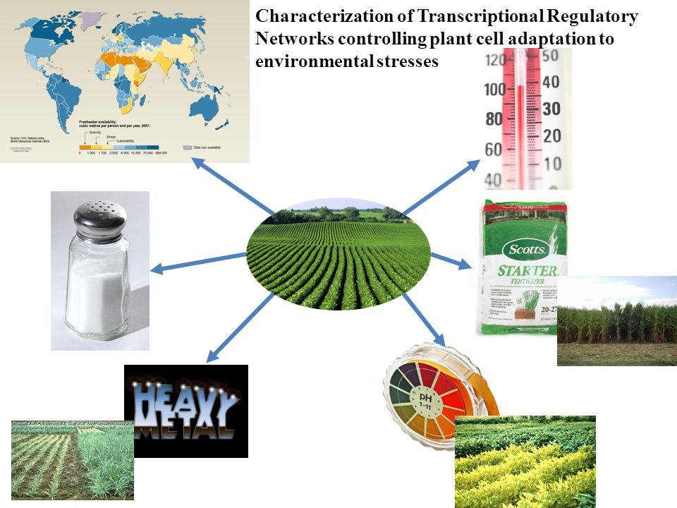 What is a Transcriptional Regulatory Network (TRN).