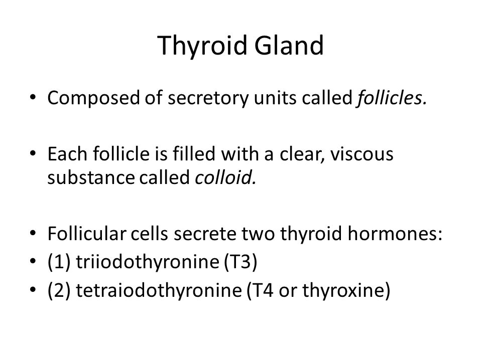 Thyroid Gland Composed of secretory units called follicles. Each follicle is filled with a clear, viscous substance called colloid. Follicular cells s