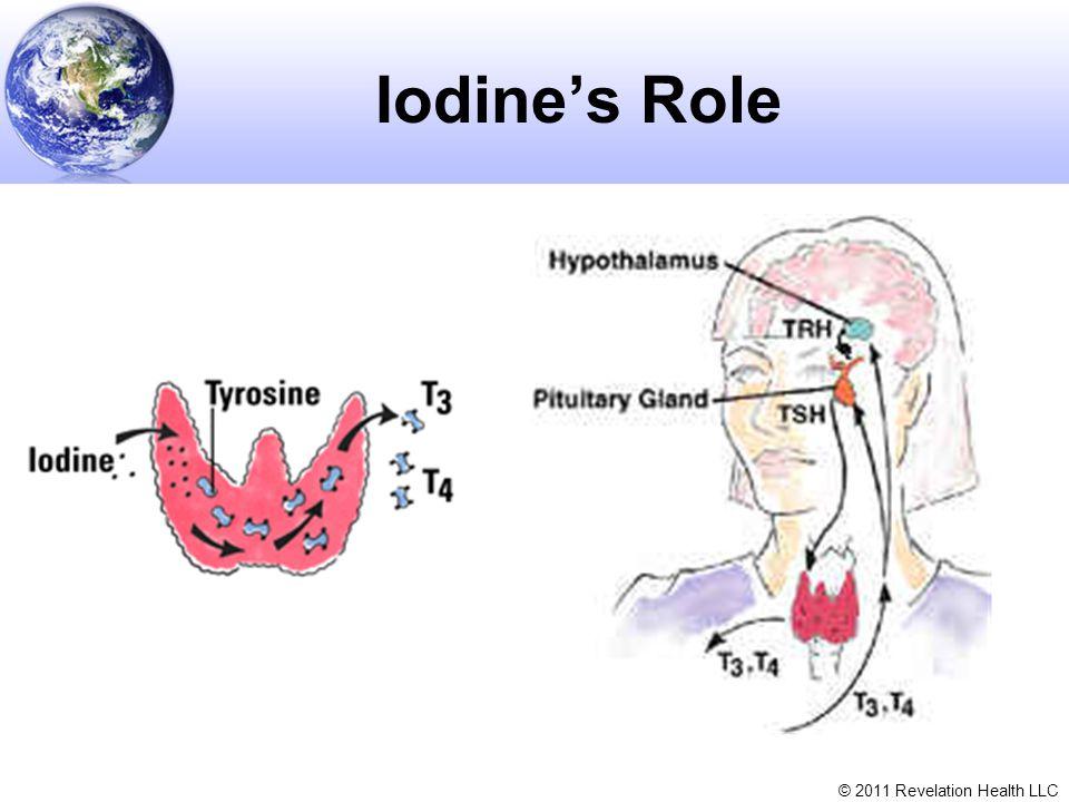 © 2011 Revelation Health LLC Iodine's Role
