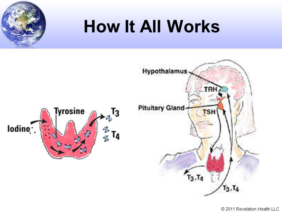 © 2011 Revelation Health LLC How It All Works