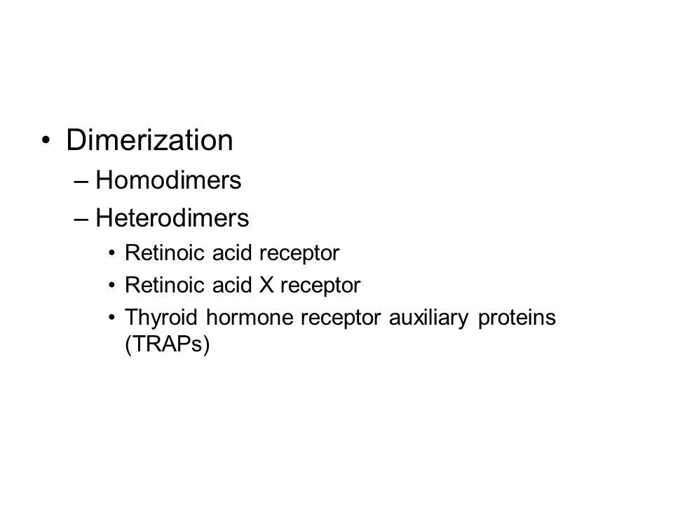 Dimerization –Homodimers –Heterodimers Retinoic acid receptor Retinoic acid X receptor Thyroid hormone receptor auxiliary proteins (TRAPs)