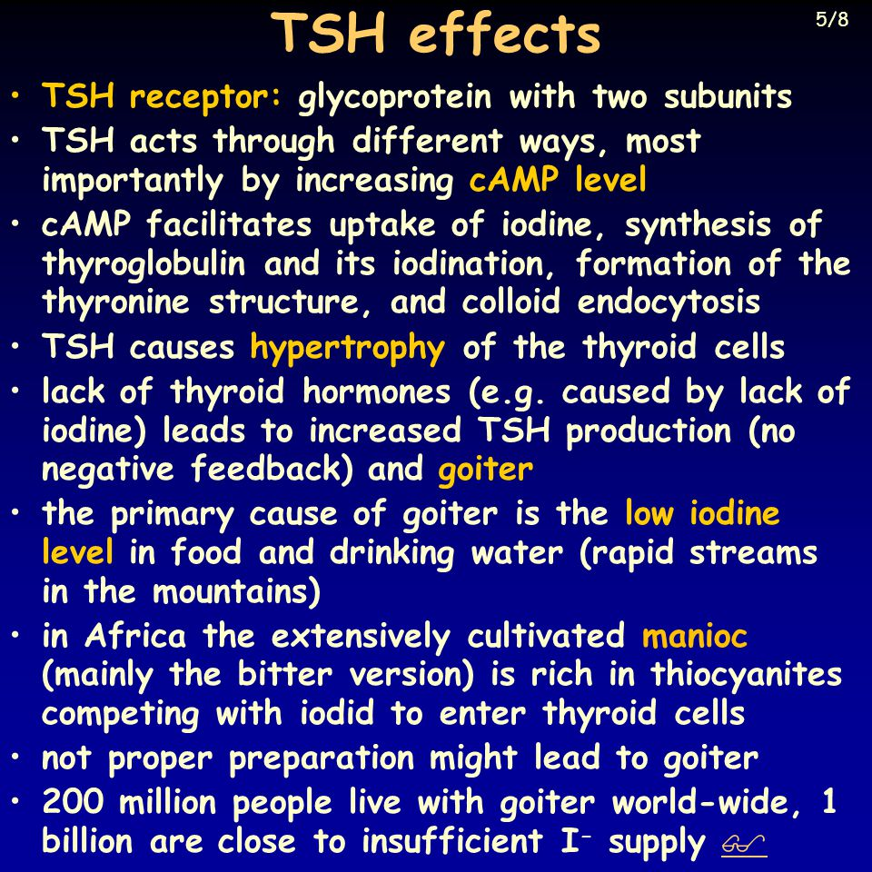 TSH effects TSH receptor: glycoprotein with two subunits TSH acts through different ways, most importantly by increasing cAMP level cAMP facilitates uptake of iodine, synthesis of thyroglobulin and its iodination, formation of the thyronine structure, and colloid endocytosis TSH causes hypertrophy of the thyroid cells lack of thyroid hormones (e.g.