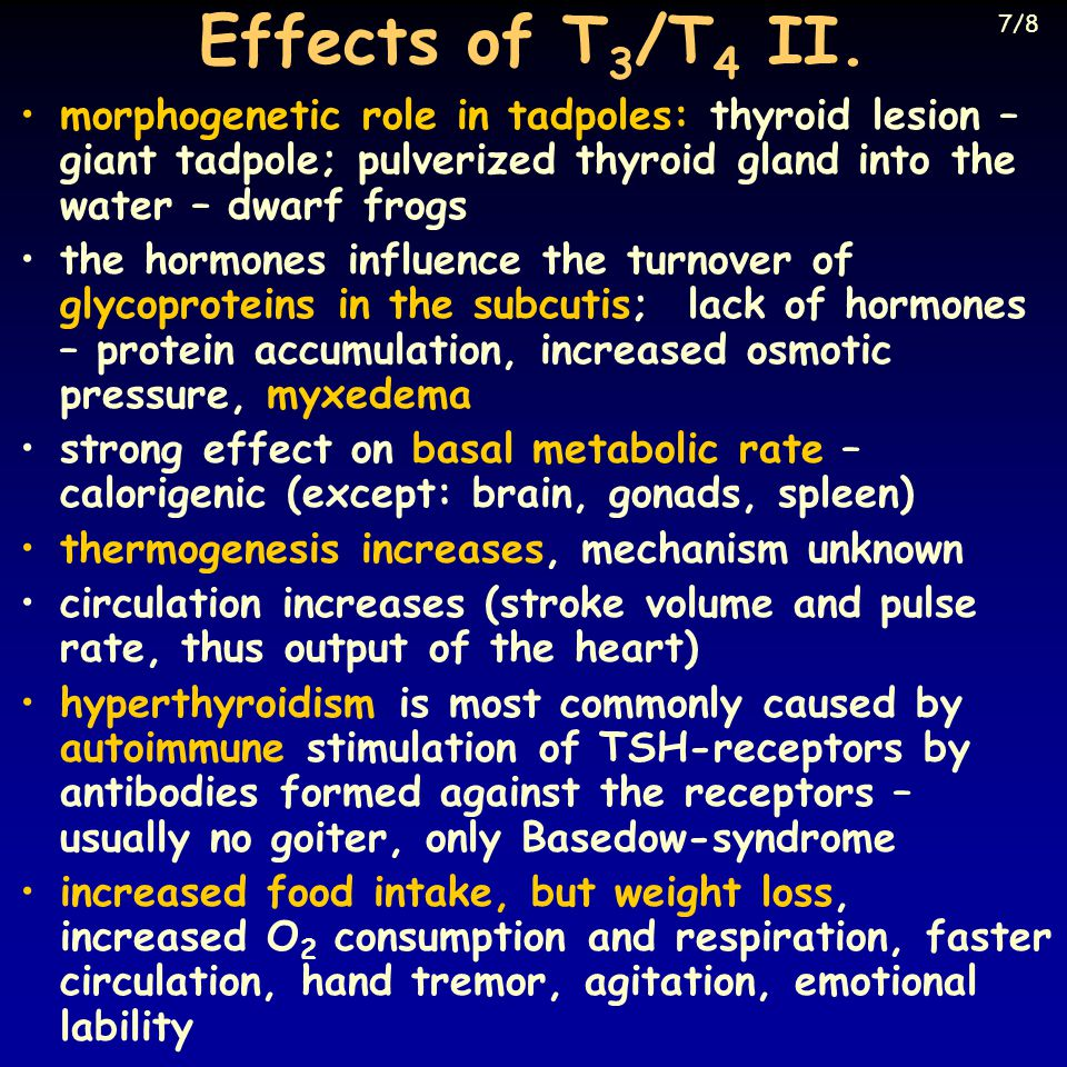 Effects of T 3 /T 4 II.