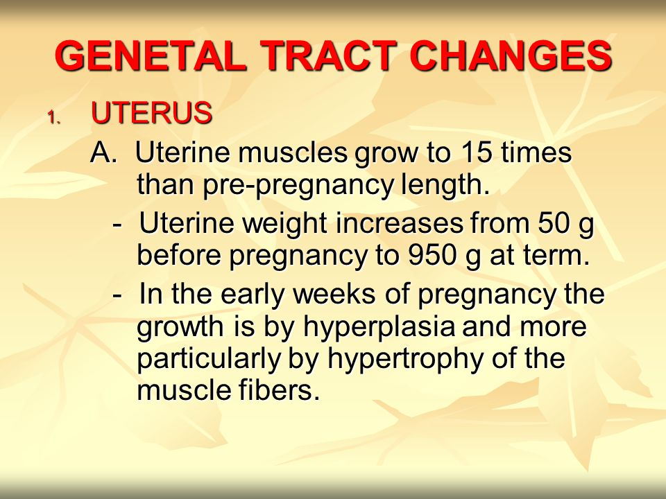 GENETAL TRACT CHANGES 1. UTERUS A. Uterine muscles grow to 15 times than pre-pregnancy length.