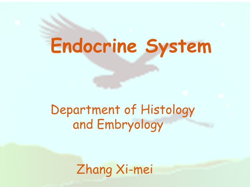 Endocrine System Department of Histology and Embryology Zhang Xi-mei