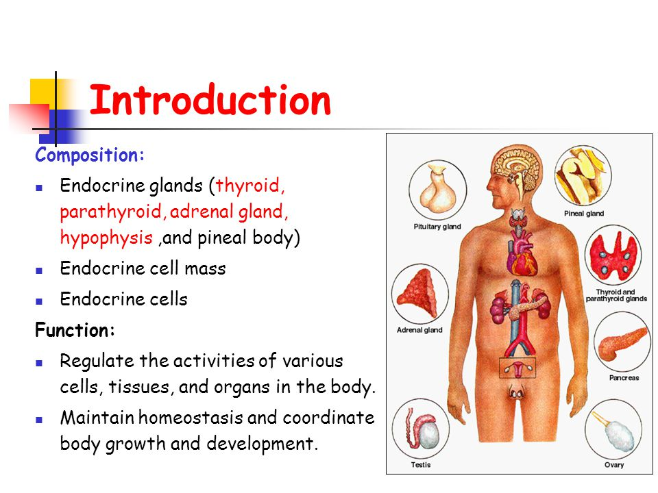 Introduction Composition: Endocrine glands (thyroid, parathyroid, adrenal gland, hypophysis,and pineal body) Endocrine cell mass Endocrine cells Function: Regulate the activities of various cells, tissues, and organs in the body.