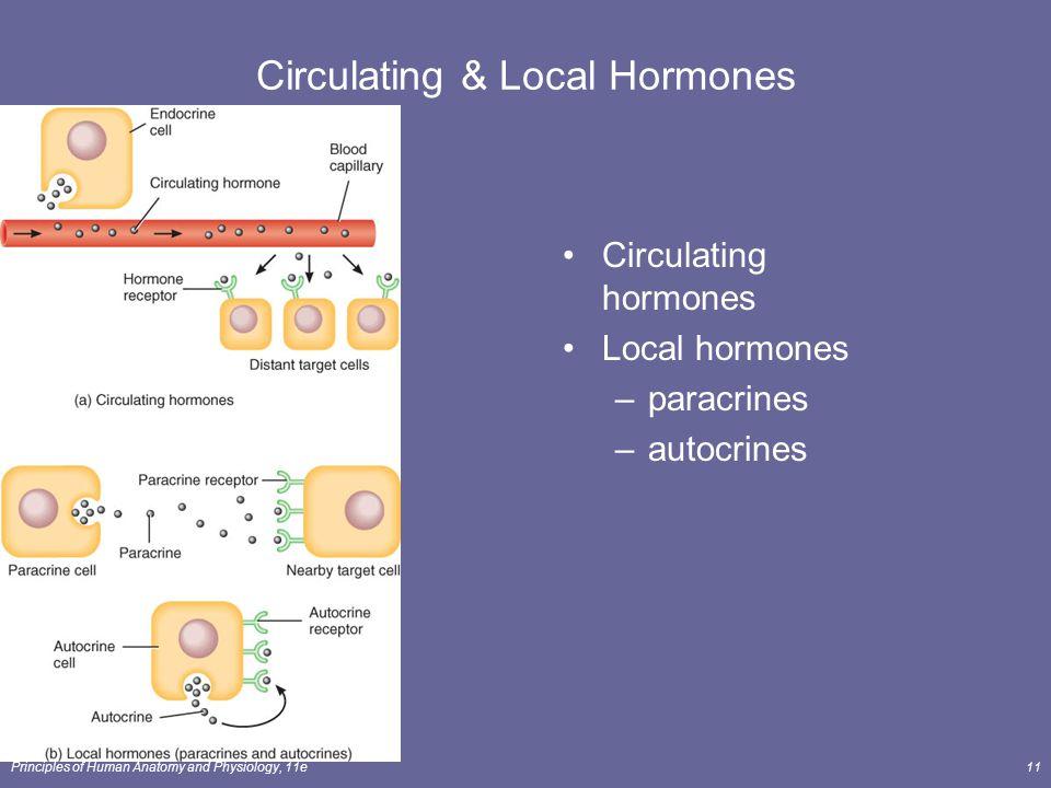 Principles of Human Anatomy and Physiology, 11e11 Circulating & Local Hormones Circulating hormones Local hormones –paracrines –autocrines