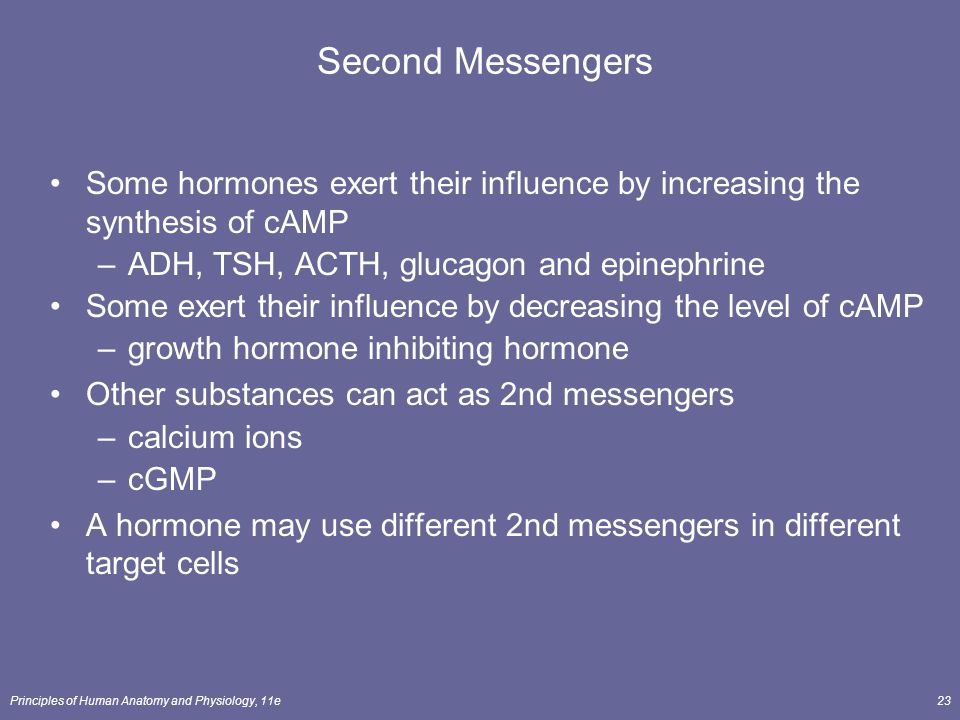 Principles of Human Anatomy and Physiology, 11e23 Second Messengers Some hormones exert their influence by increasing the synthesis of cAMP –ADH, TSH,