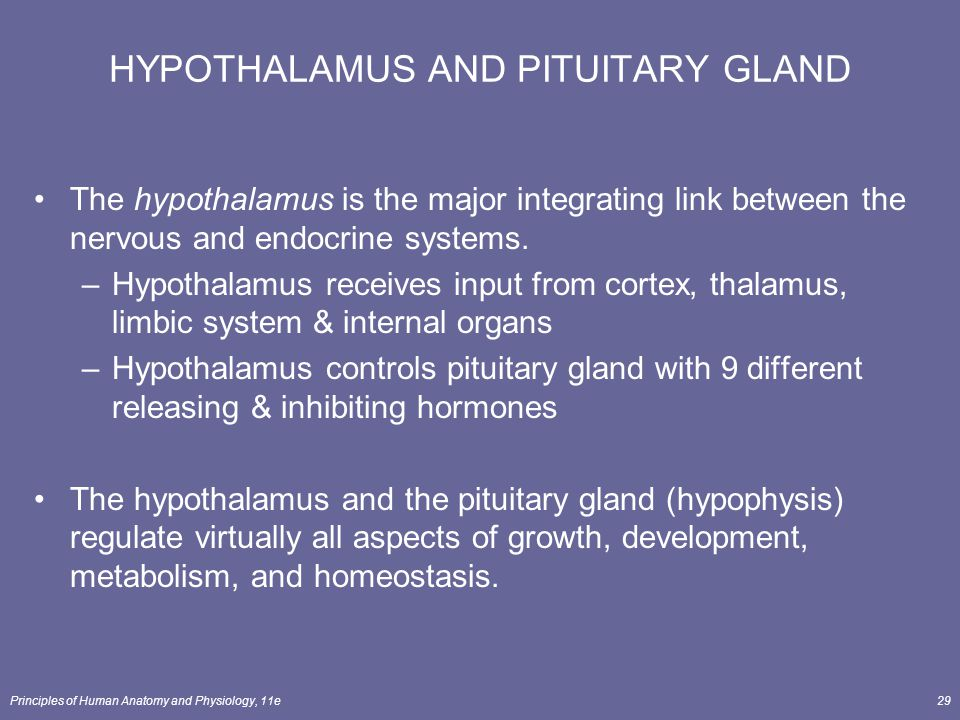 Principles of Human Anatomy and Physiology, 11e29 HYPOTHALAMUS AND PITUITARY GLAND The hypothalamus is the major integrating link between the nervous
