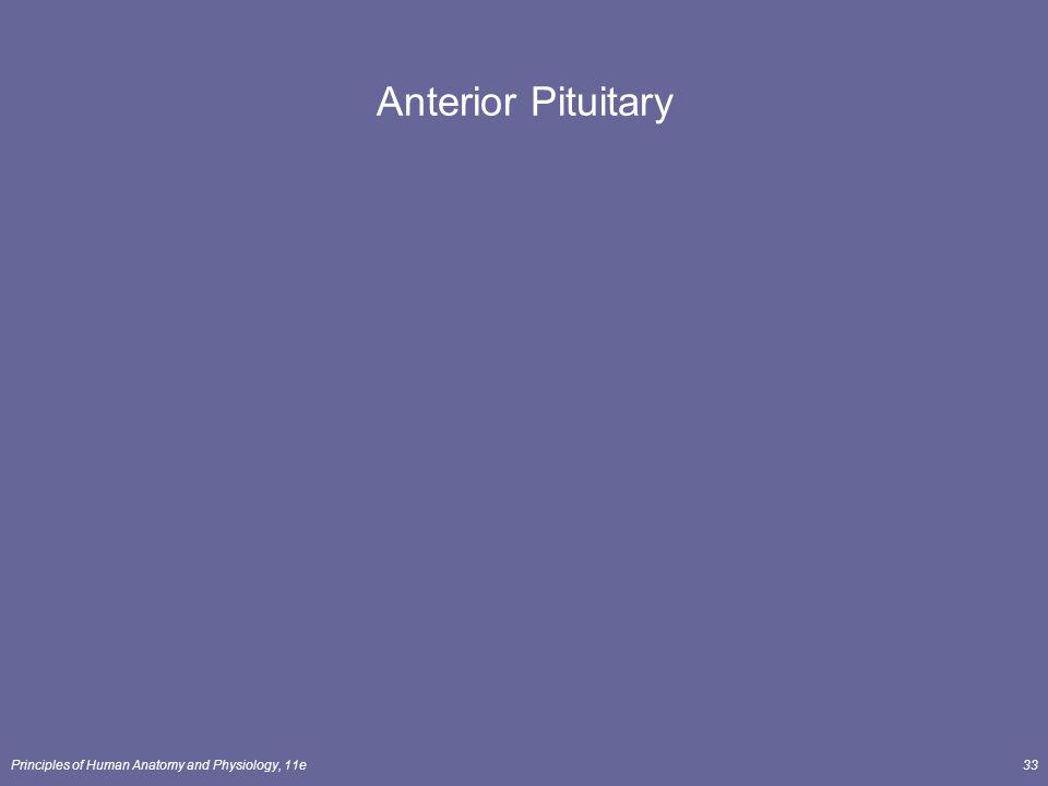 Principles of Human Anatomy and Physiology, 11e33 Anterior Pituitary