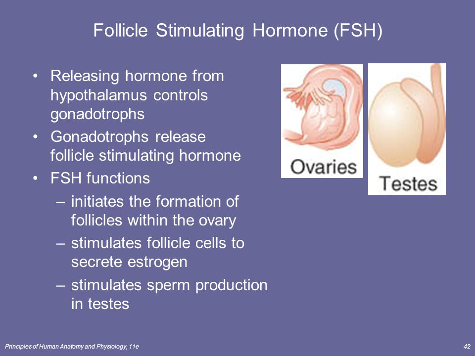 Principles of Human Anatomy and Physiology, 11e42 Follicle Stimulating Hormone (FSH) Releasing hormone from hypothalamus controls gonadotrophs Gonadot