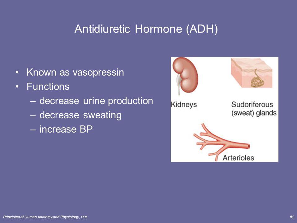 Principles of Human Anatomy and Physiology, 11e52 Antidiuretic Hormone (ADH) Known as vasopressin Functions –decrease urine production –decrease sweat