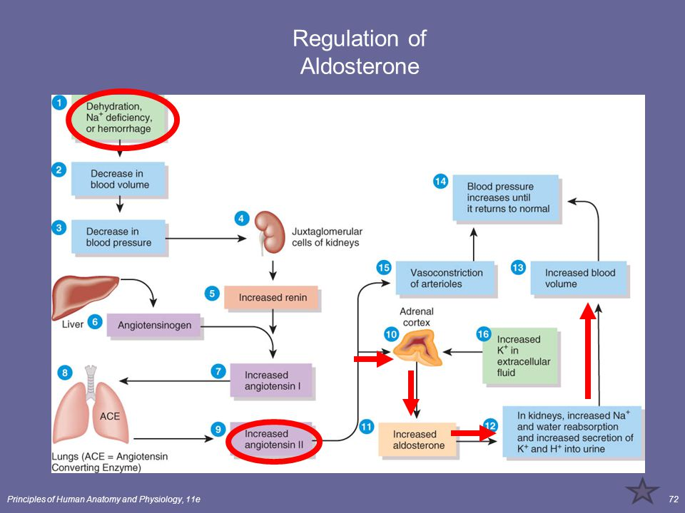 Principles of Human Anatomy and Physiology, 11e72 Regulation of Aldosterone