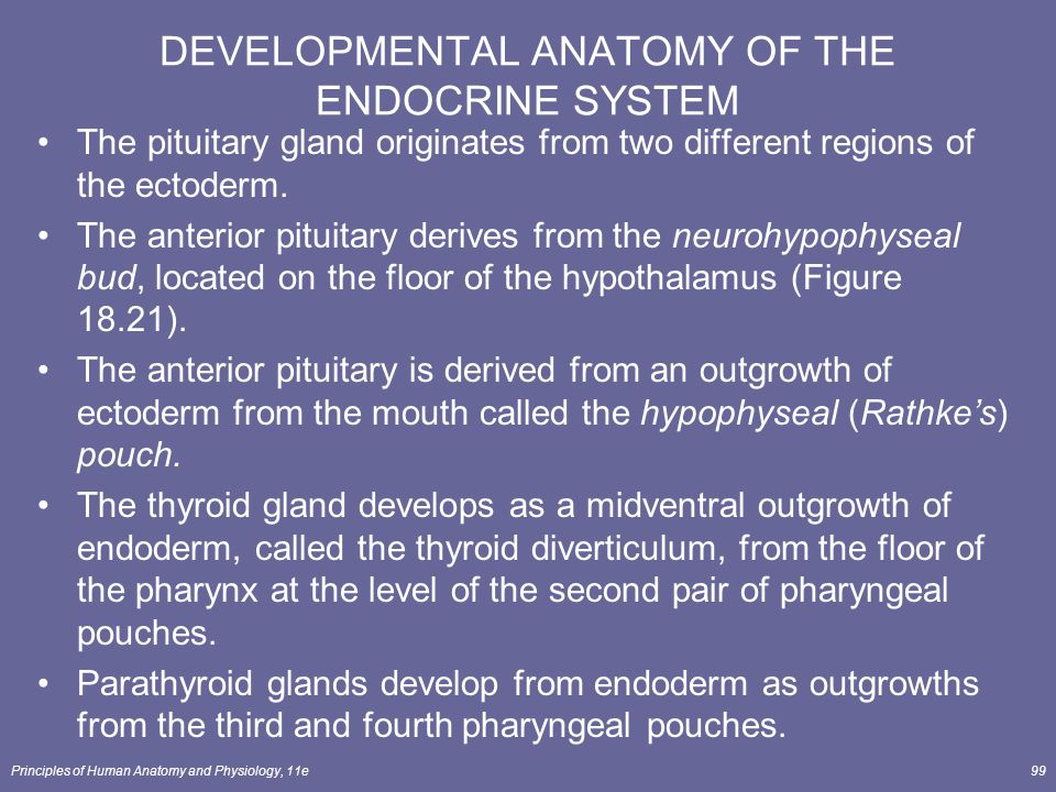 Principles of Human Anatomy and Physiology, 11e99 DEVELOPMENTAL ANATOMY OF THE ENDOCRINE SYSTEM The pituitary gland originates from two different regi