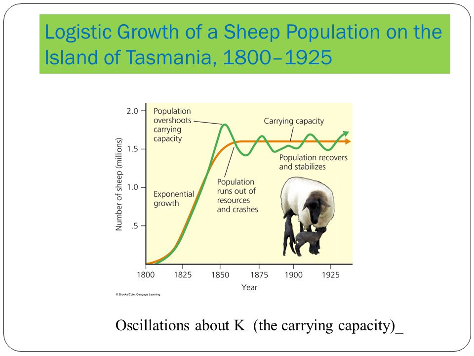 Logistic Growth of a Sheep Population on the Island of Tasmania, 1800–1925 Oscillations about K (the carrying capacity)_