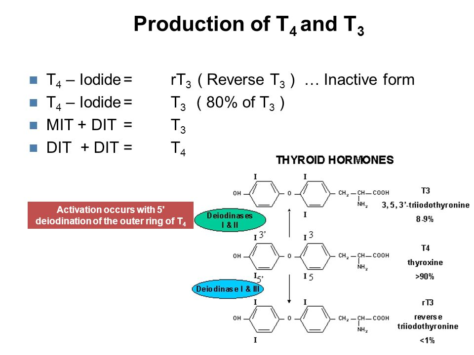 Variation of levels in Binding Proteins Free T3 and free T4 remain stable, but Total T3 and T4 may vary  Binding Proteins  Bound T3 and T4  Binding Proteins  Bound T3 and T4 Clinical conditions that effect the concentrations of the Thyroid Binding Proteins also effect the Total T3 and Total T4 hormones  But the Total T3 and T4 are not the physiologically active forms