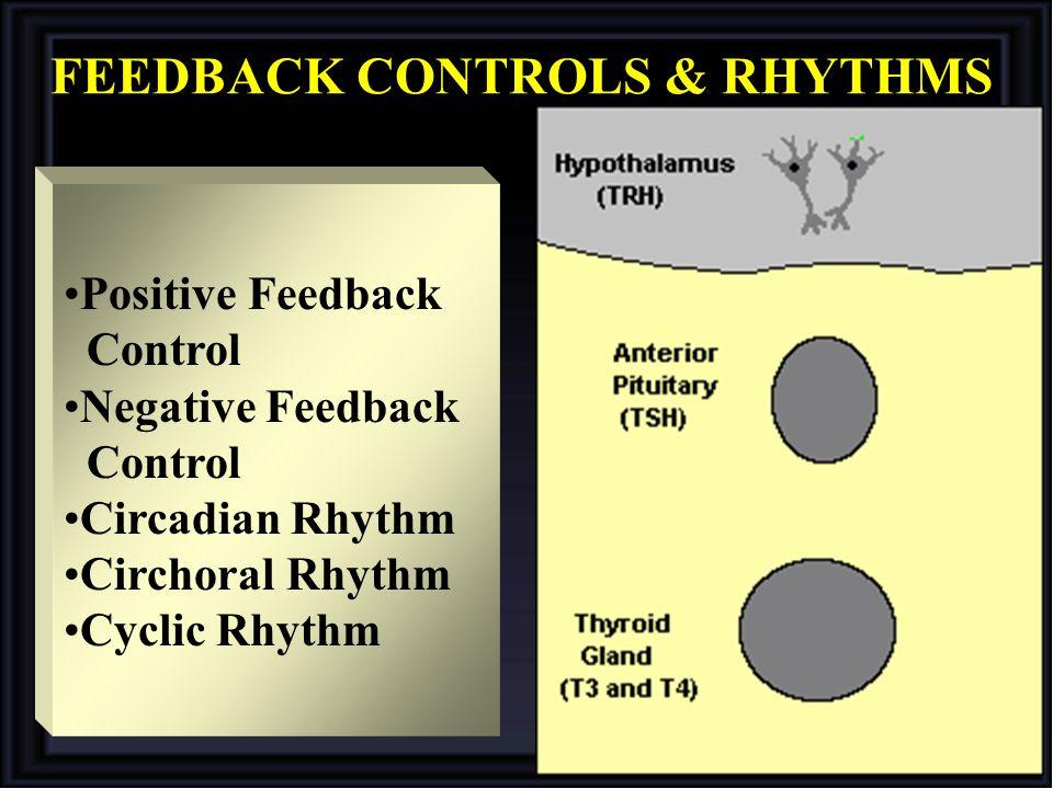 FEEDBACK CONTROLS & RHYTHMS Positive Feedback Control Negative Feedback Control Circadian Rhythm Circhoral Rhythm Cyclic Rhythm