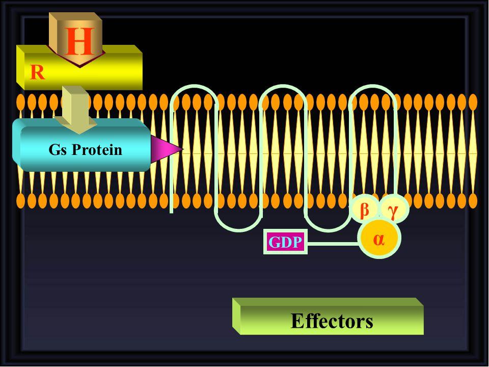 γ β α GDP R H Gs Protein Effectors